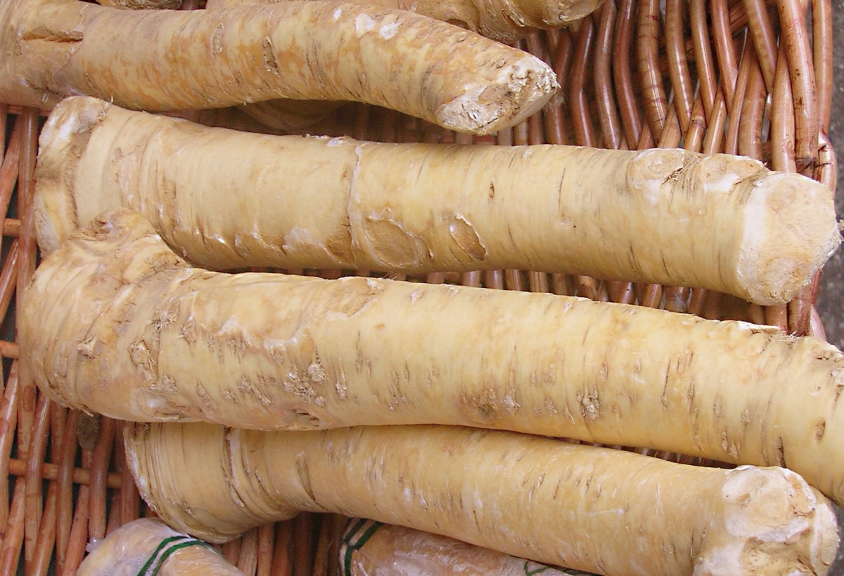 Horseradish Root and Sauce - A Tasty and Healthy Condiment