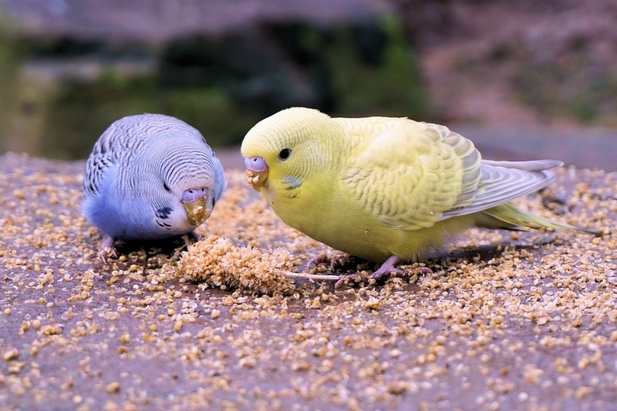 Offer your new pair a tasty and healthy snack to smooth those ruffled feathers.