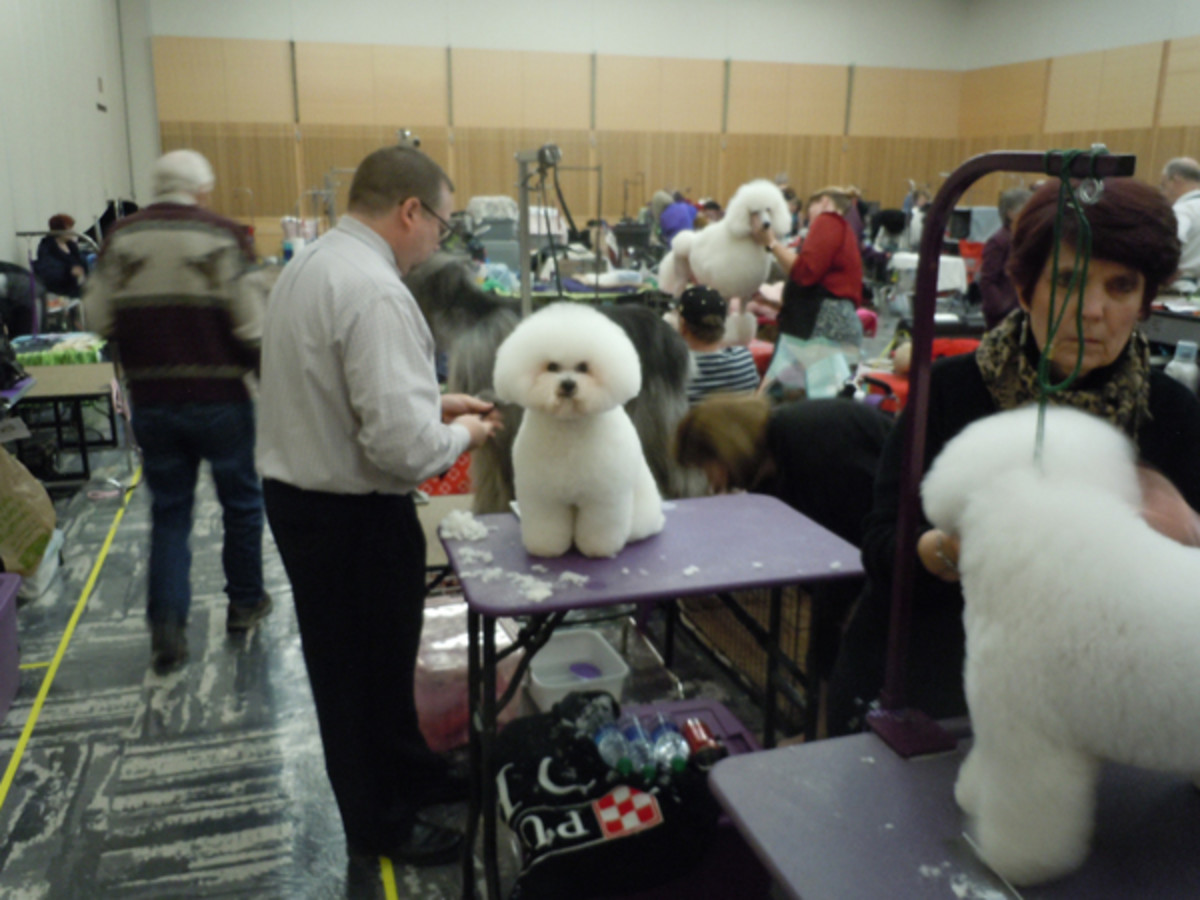Erie Dog Show: Behind the Scenes