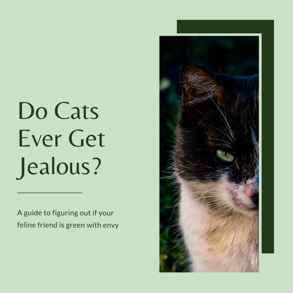 This article will help you determine if your cat is experiencing some jealousy and provide some tips on how you can help them feel more comfortable.