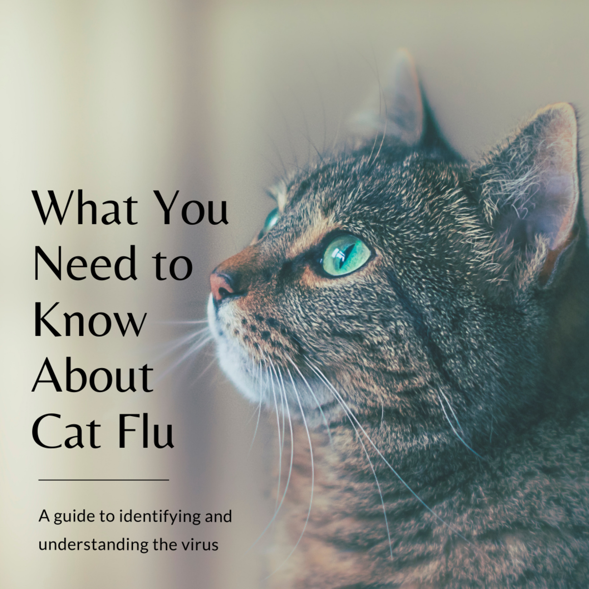 This guide will help you properly identify signs of cat flu and provide you with resources to help prevent your feline friend from contracting the virus in the first place.