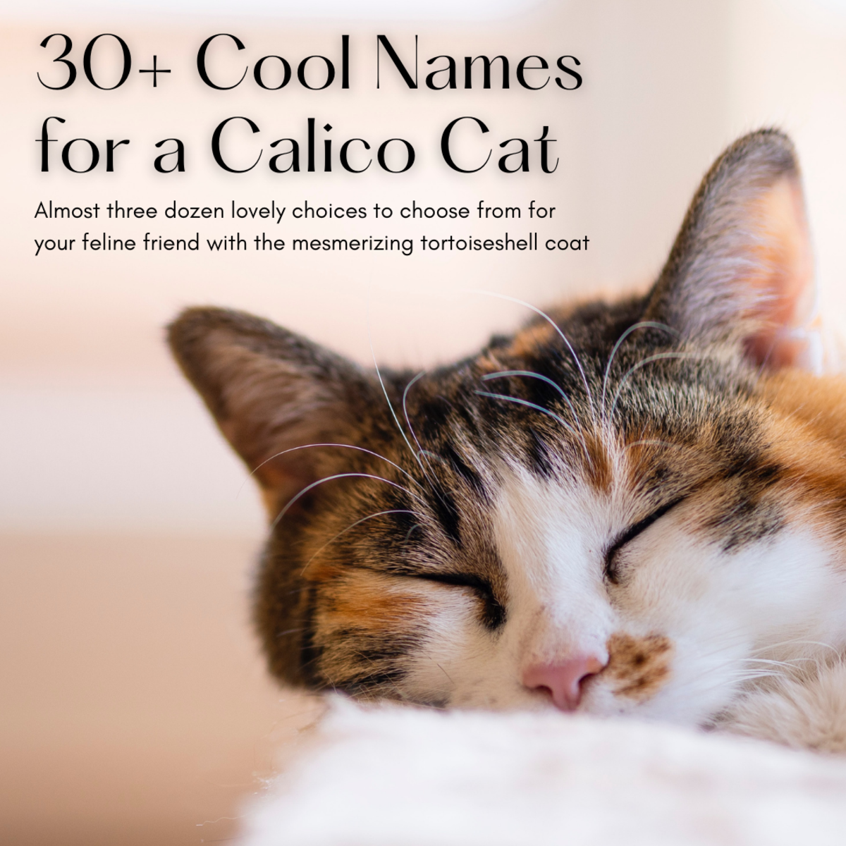 Take a look at almost three dozen wonderful names for your kitty with the calico coat.