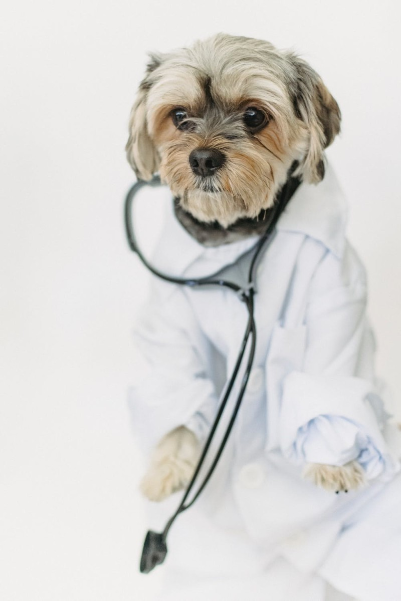 canine-kennel-cough-on-the-rise-in-canada-as-human-pandemic-continues