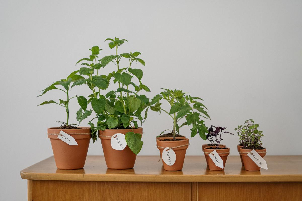7-spices-for-you-to-grow-at-home-and-have-your-vegetable-garden