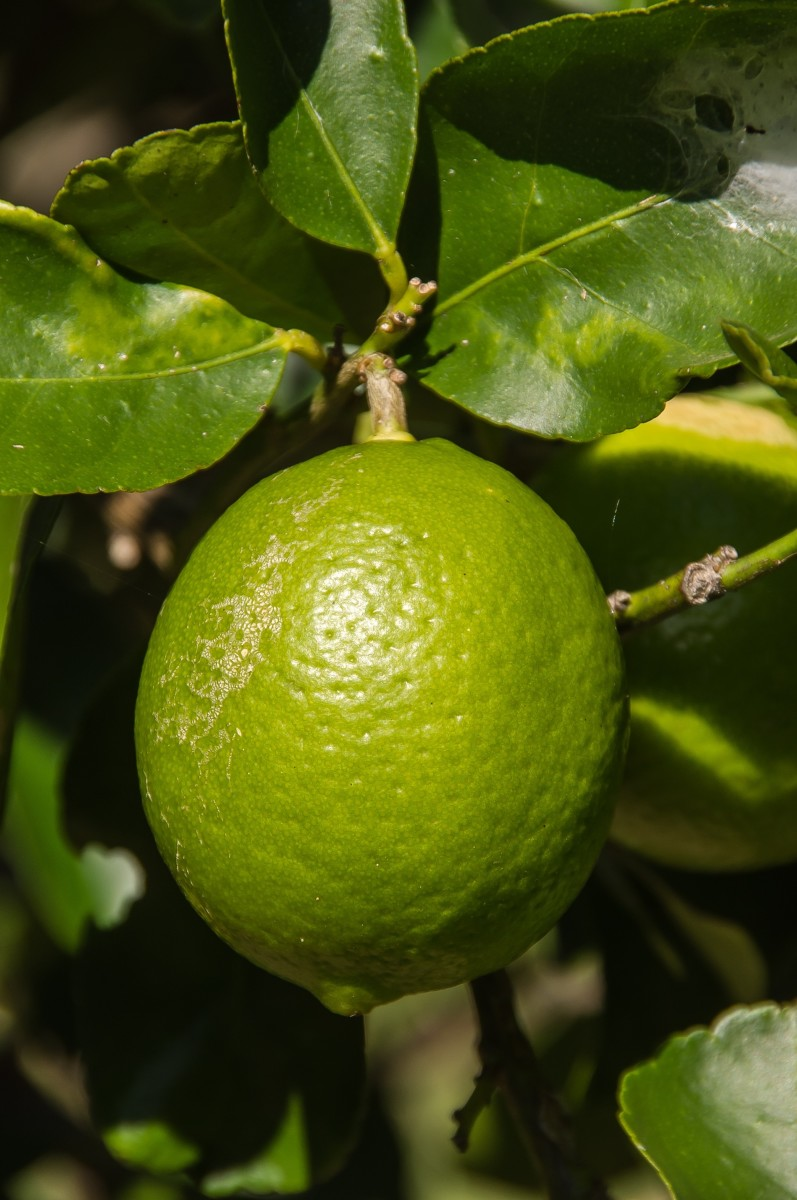 Tahiti lemon