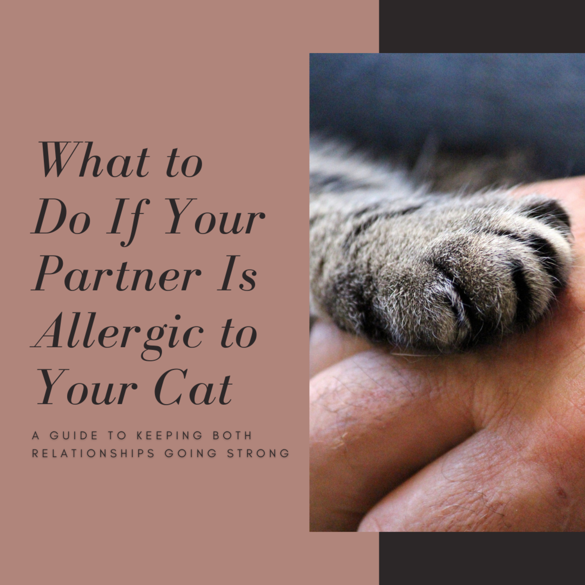 This guide will help you figure out how to keep your relationship with both your partner and your cat going strong, even when one is allergic to the other.
