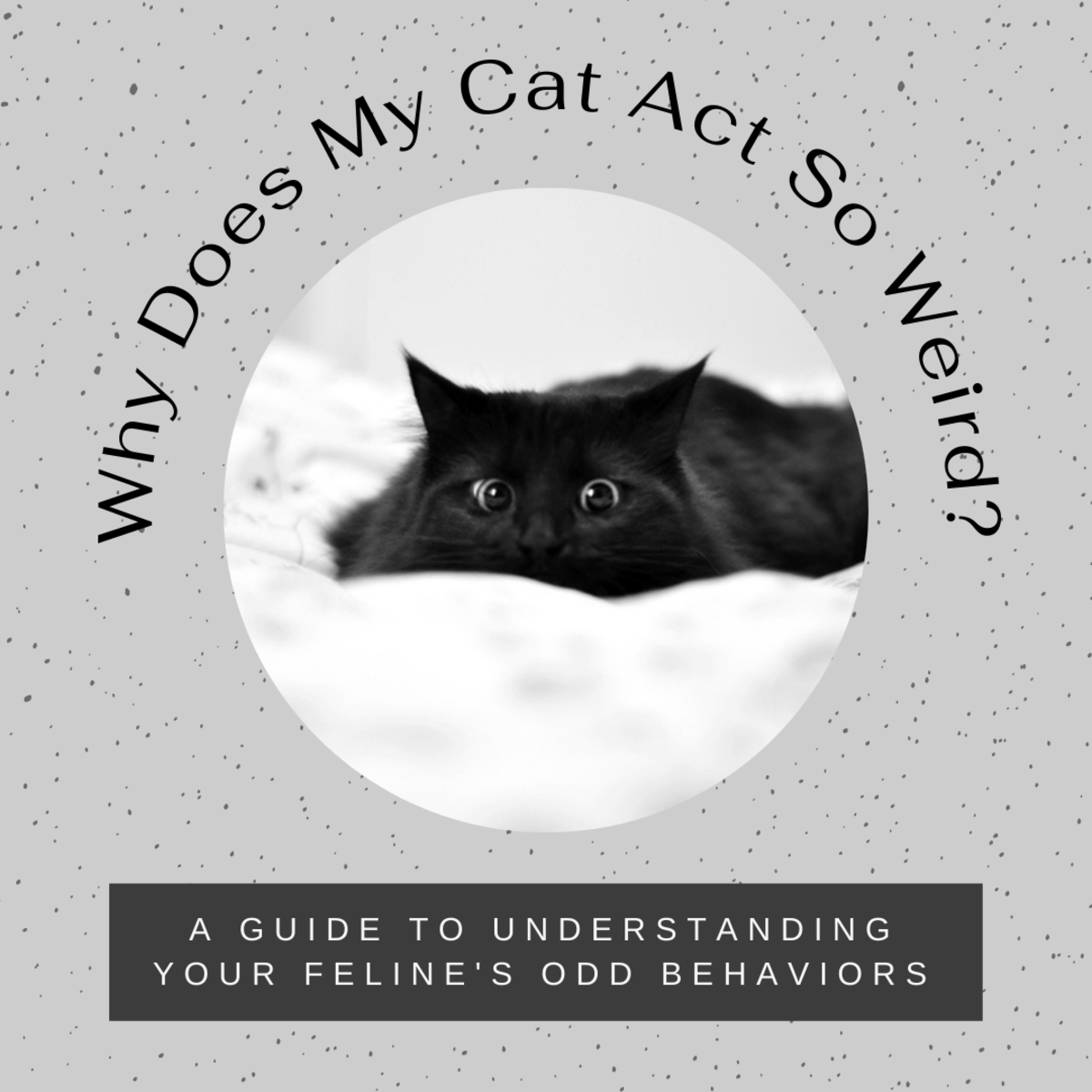 This article will help you gain a better understanding of your cat's odd behavioral patterns.
