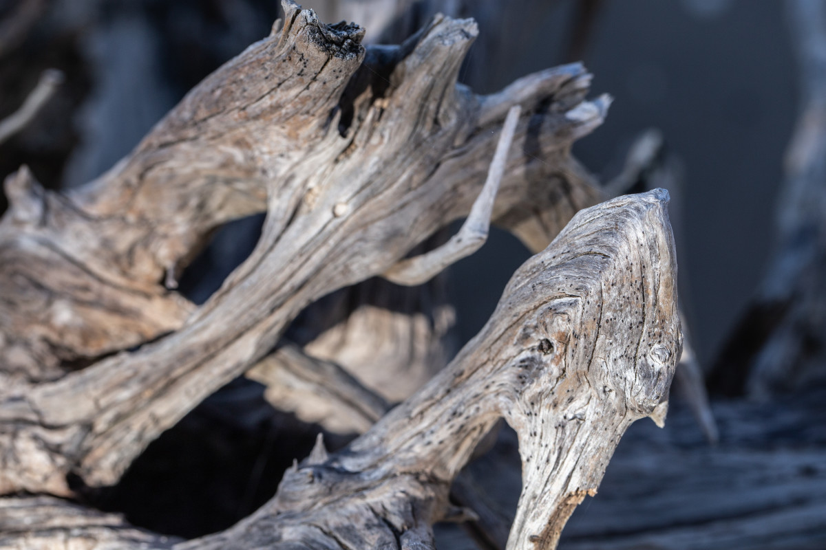 Please note that you will need to buy your driftwood from a pet store to ensure that it is clean and safe for your tank.