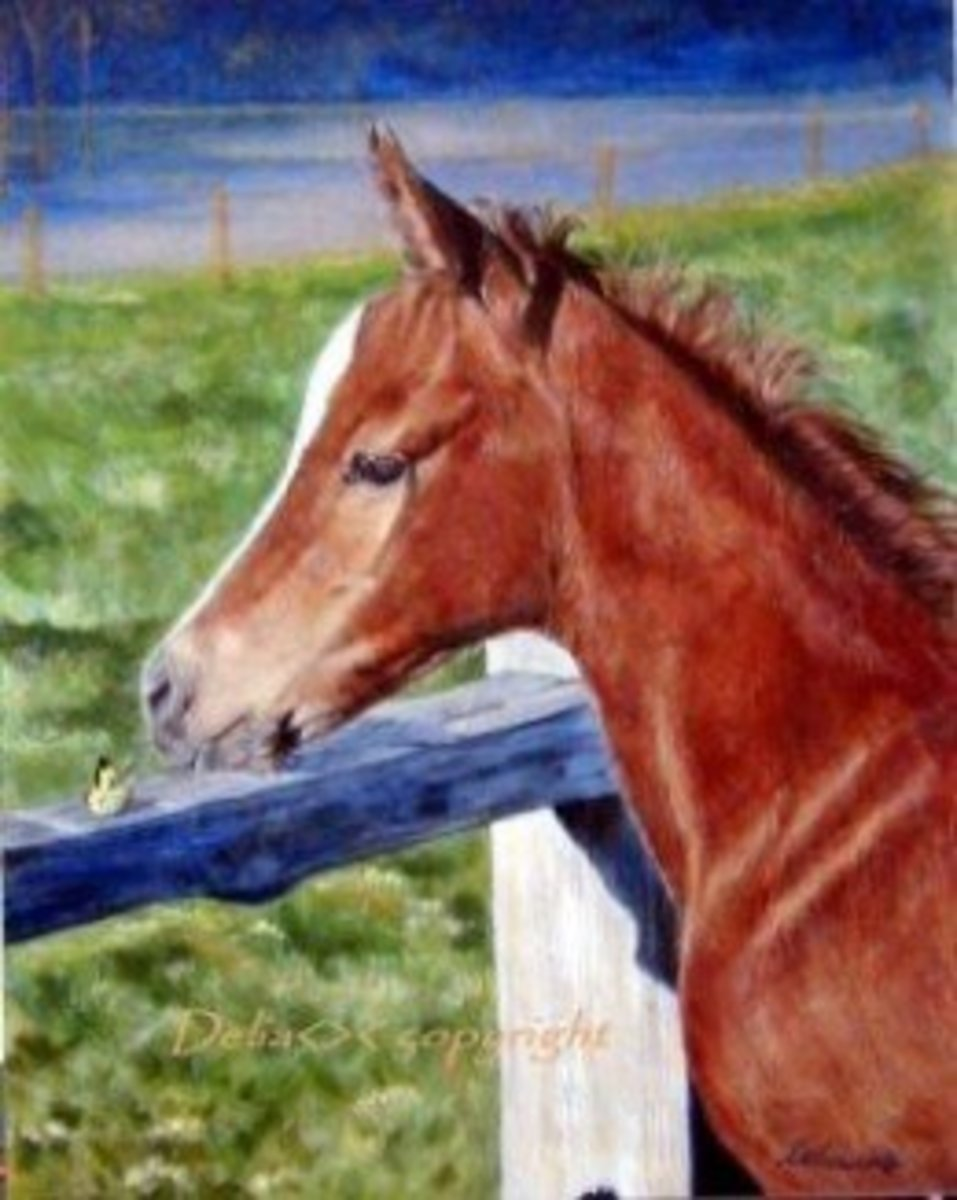 """Foal and Butterfly"""