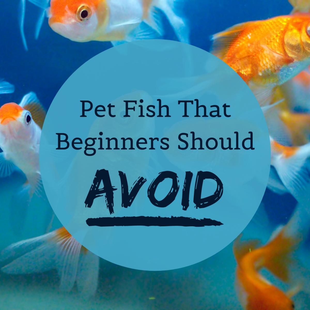 Fish to Avoid in Beginner Aquariums: Difficult Species