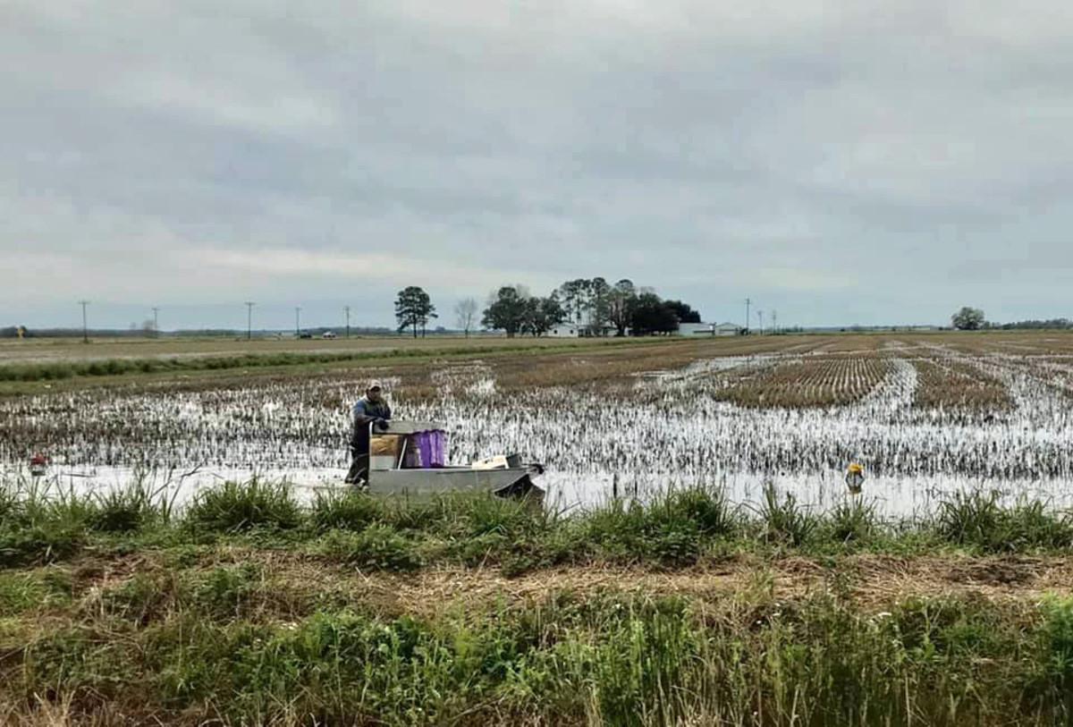 Crawfish Farming - Acadia Parish Louisiana