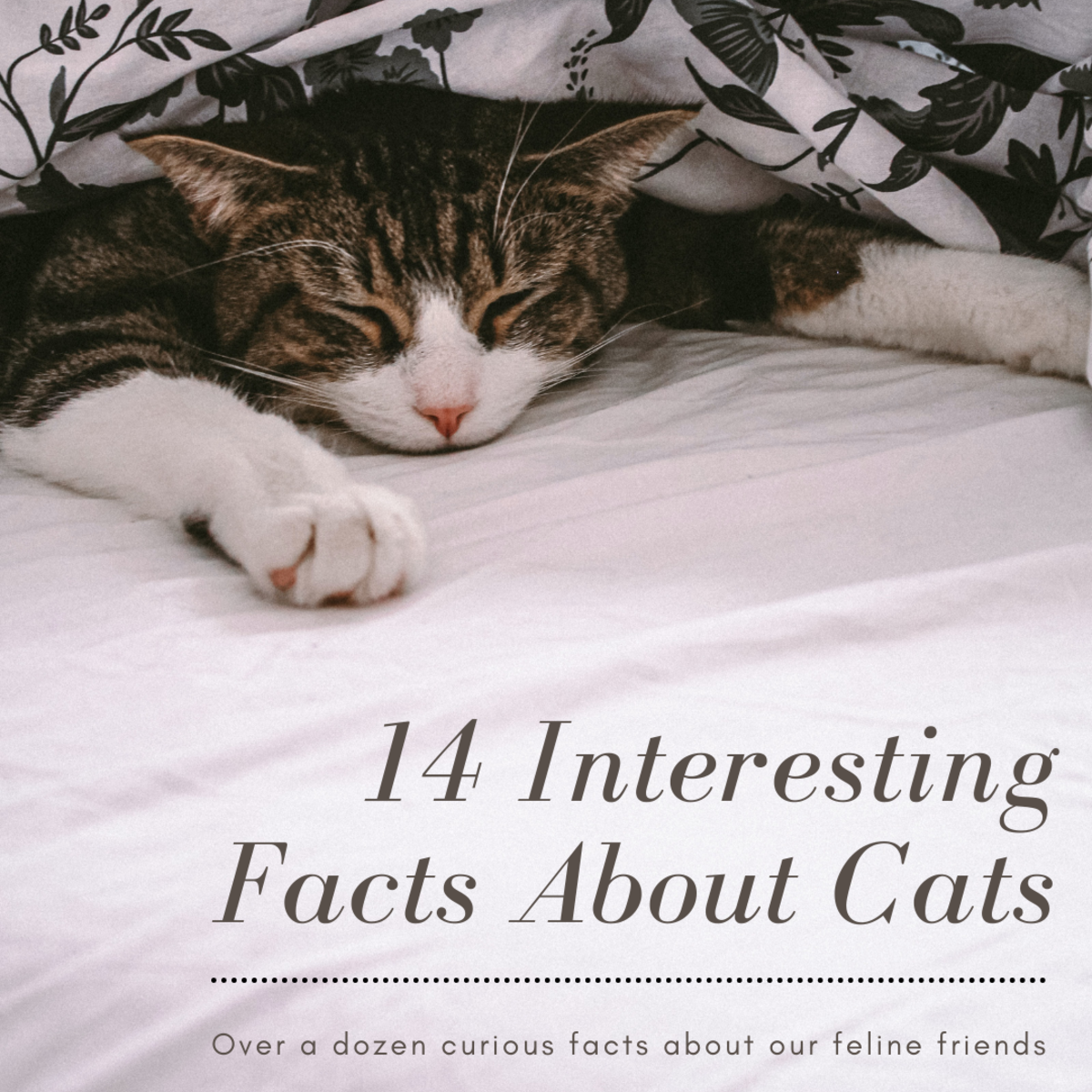 14 Cool and Interesting Facts About Cats That You May Not Know About