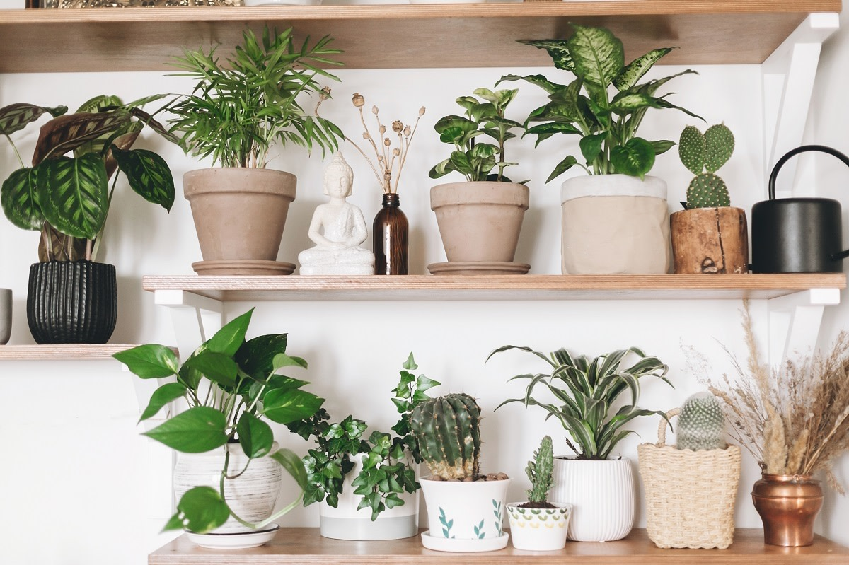 10-herbs-that-you-can-grow-year-round