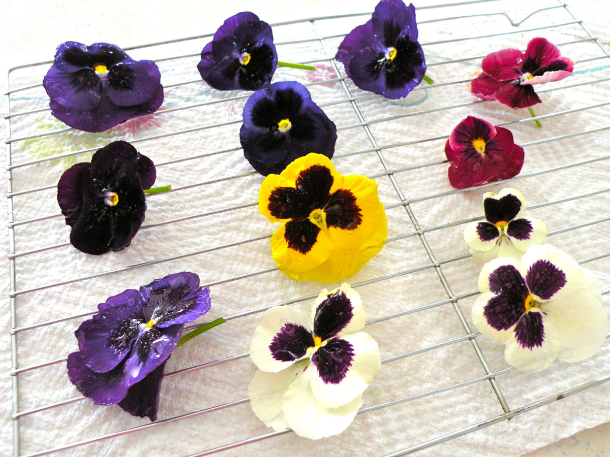 Dry flowers on a cake rack over a paper towel