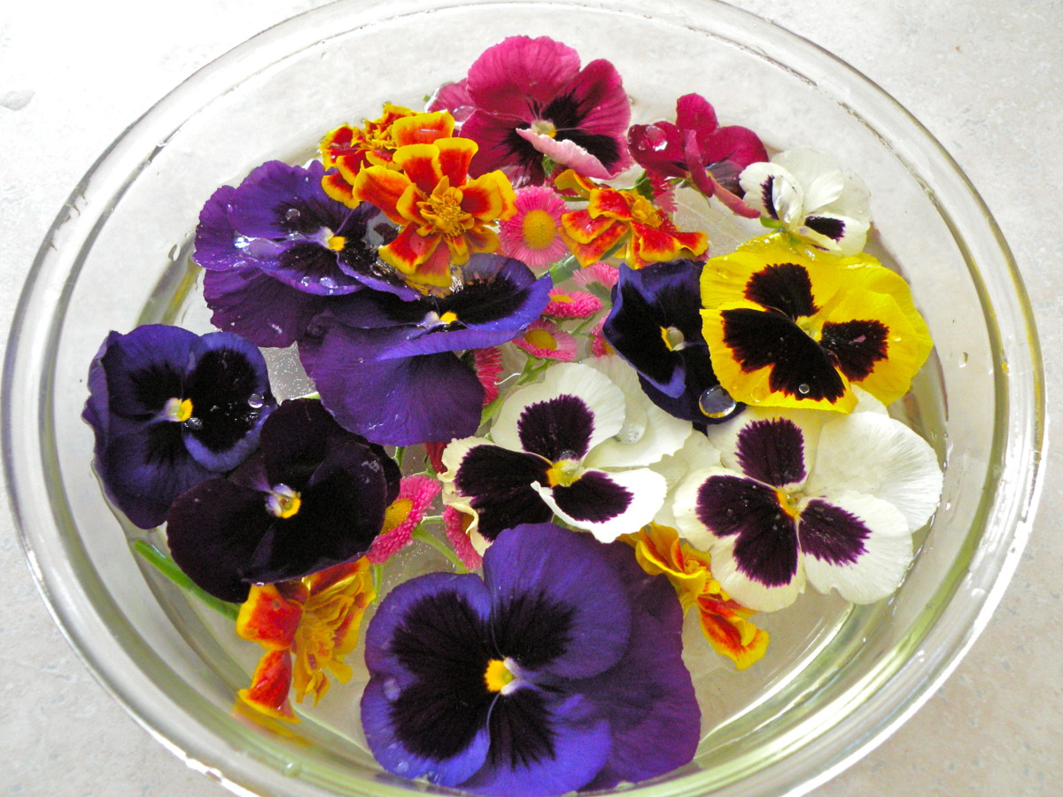 Cut flowers and place in shallow bowl of water to wash and hydrate (this will make blooms last longer).
