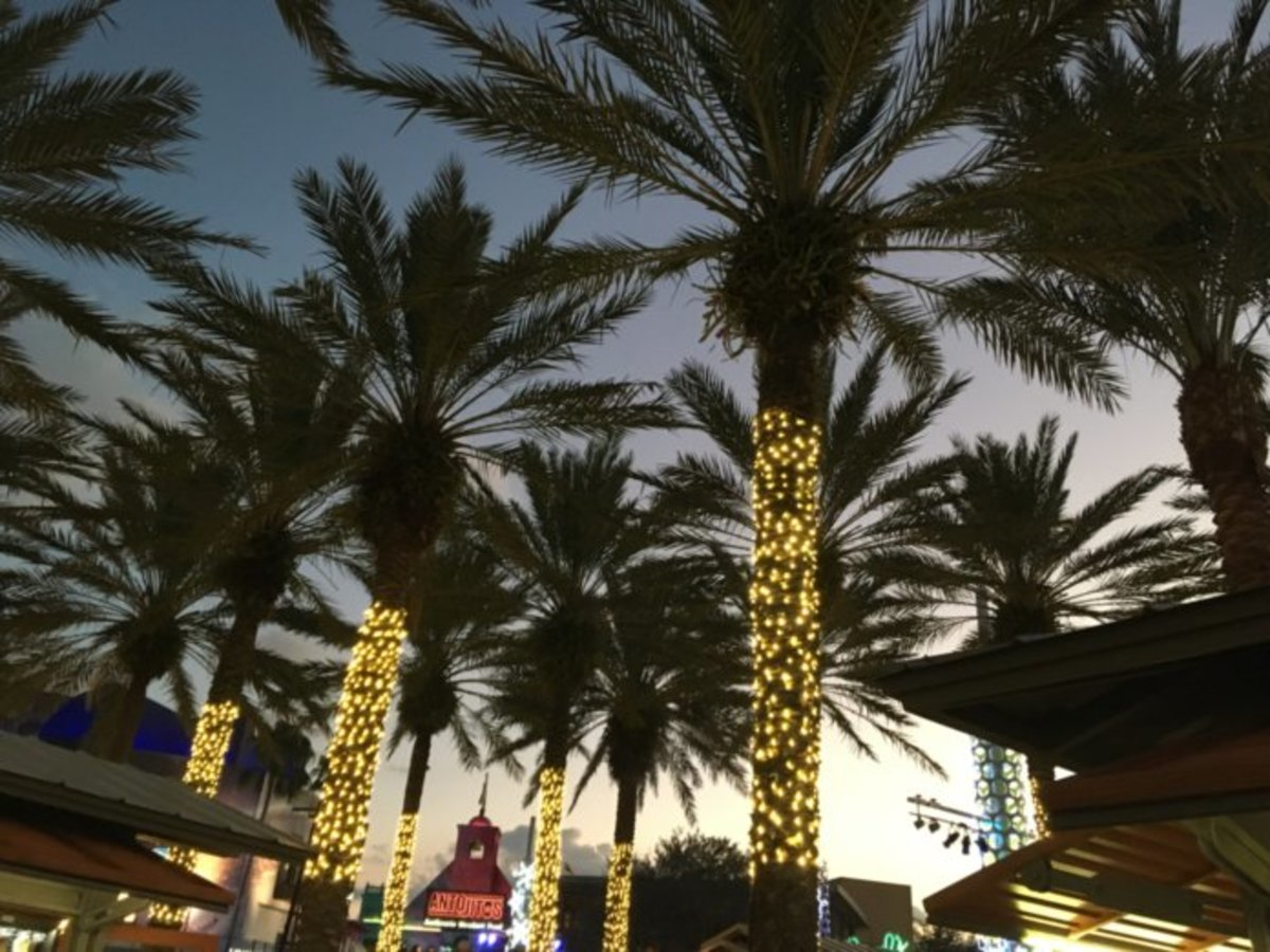 Lighted palm trees in Florida