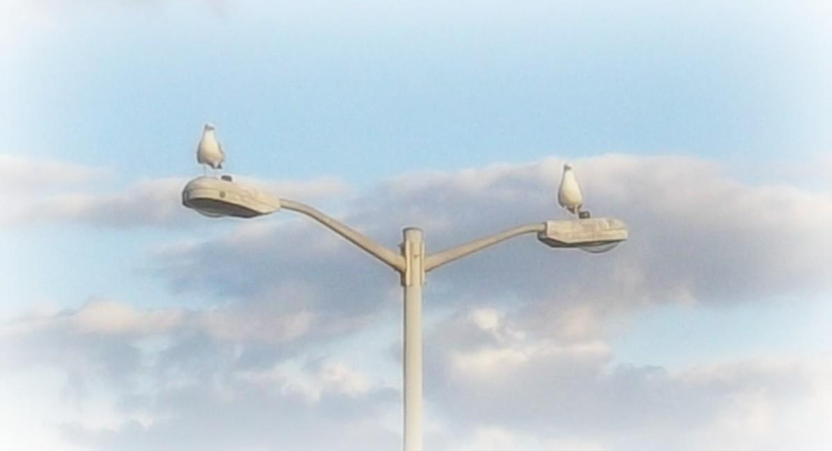 Birds on lamp posts
