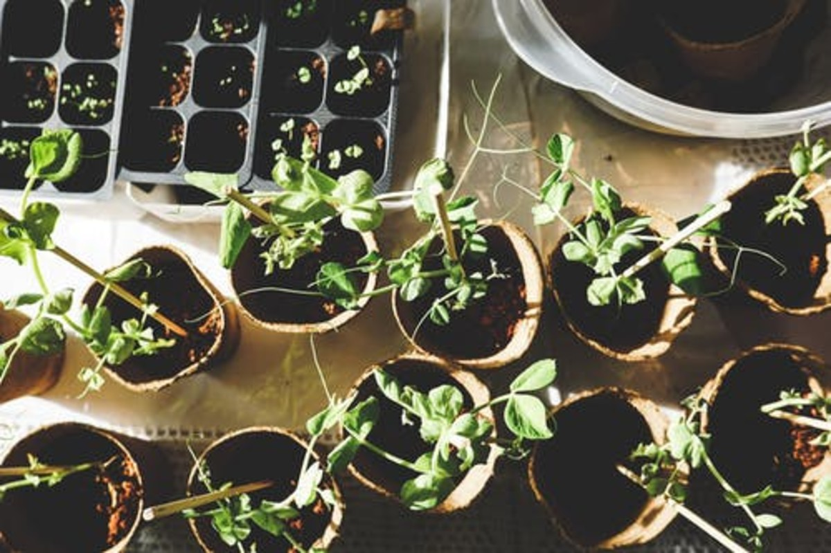 how-to-grow-herbs-in-the-home-garden-for-beginners