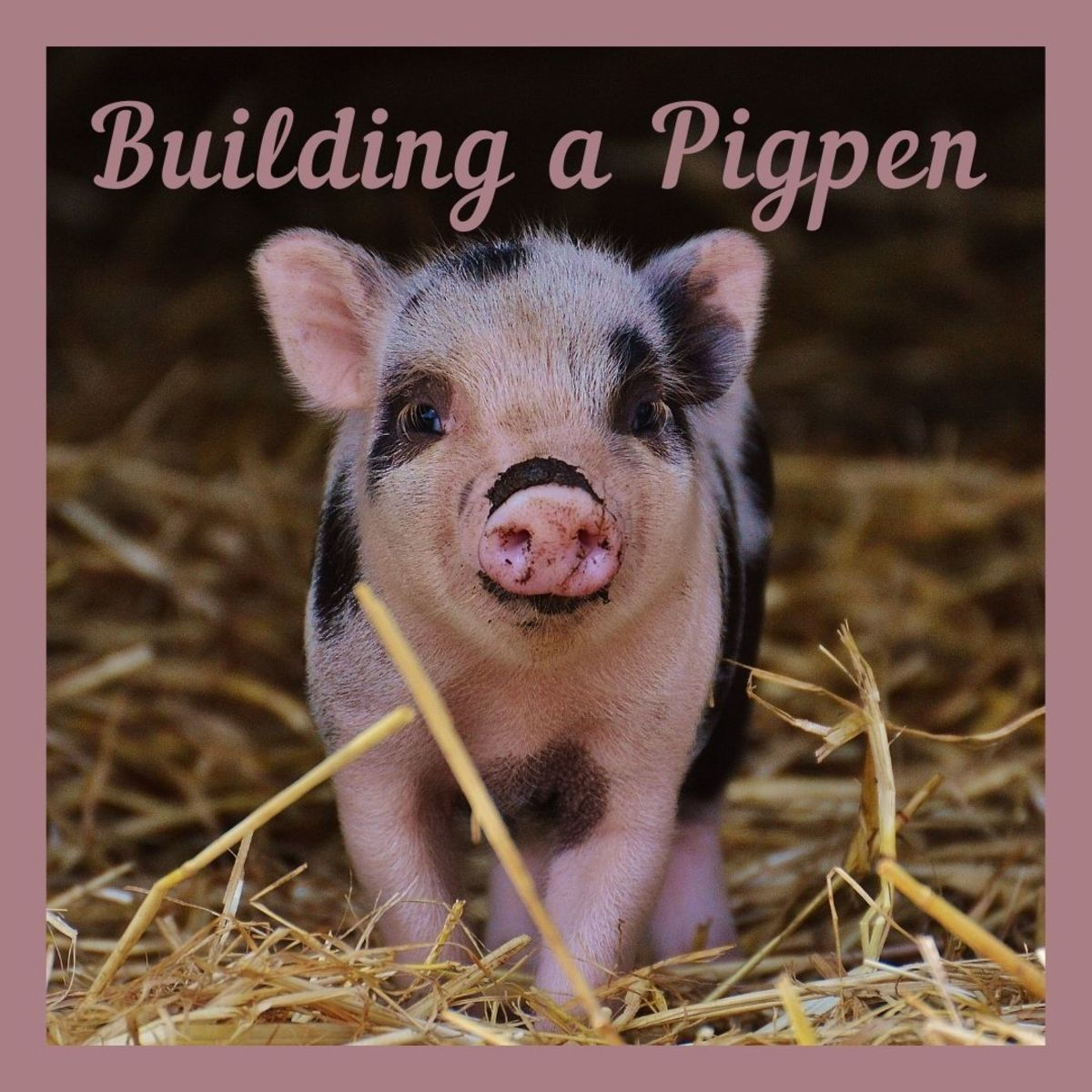 A basic guide to building a pigpen