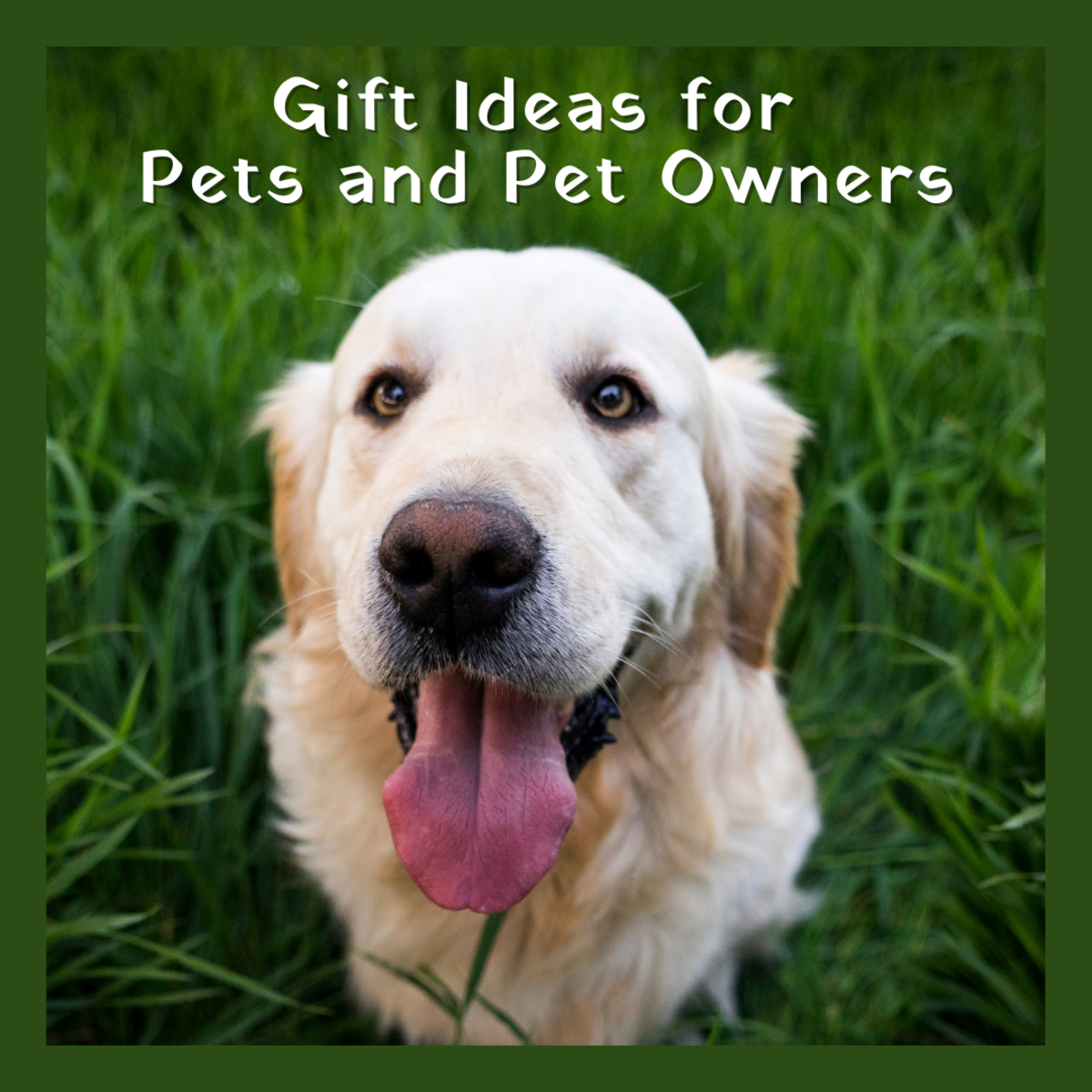 6 Awesome Gift Ideas for Pets and Pet Lovers