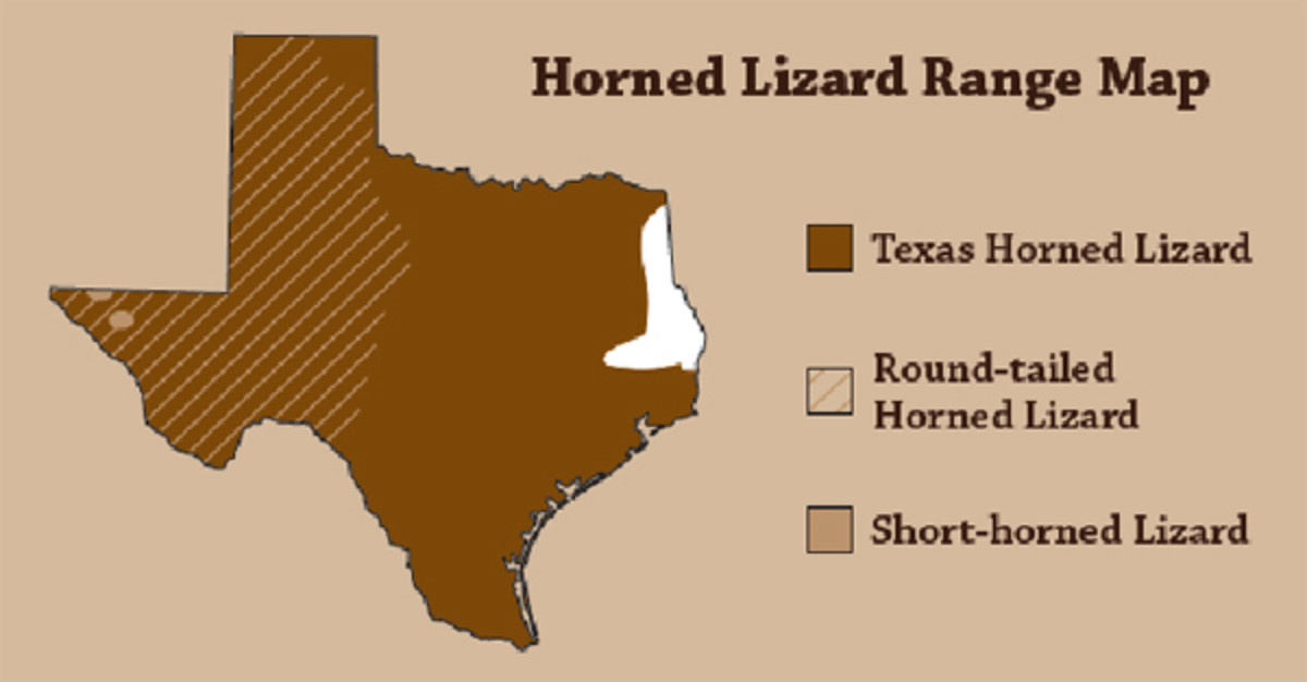 Range Map of the Horned Lizard.