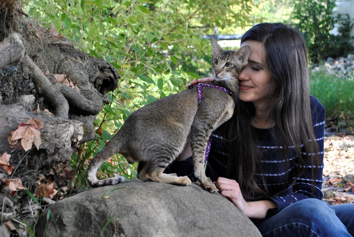 myth-about-cat-allergies-and-hypoallergenic-cat-breeds-cataristocrat-cattery