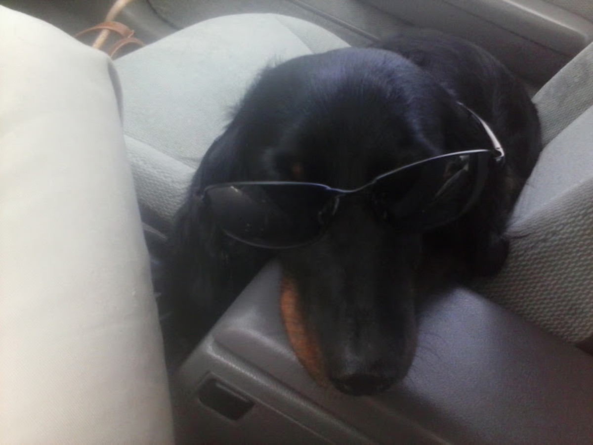 Harold Dog