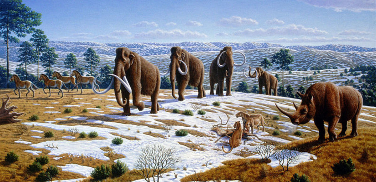 Woolly Mammoths in their natural habitat.