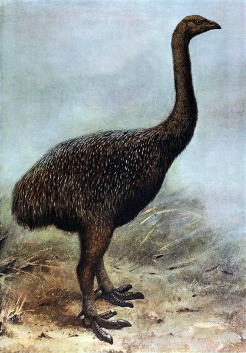 A painting of  a moa.