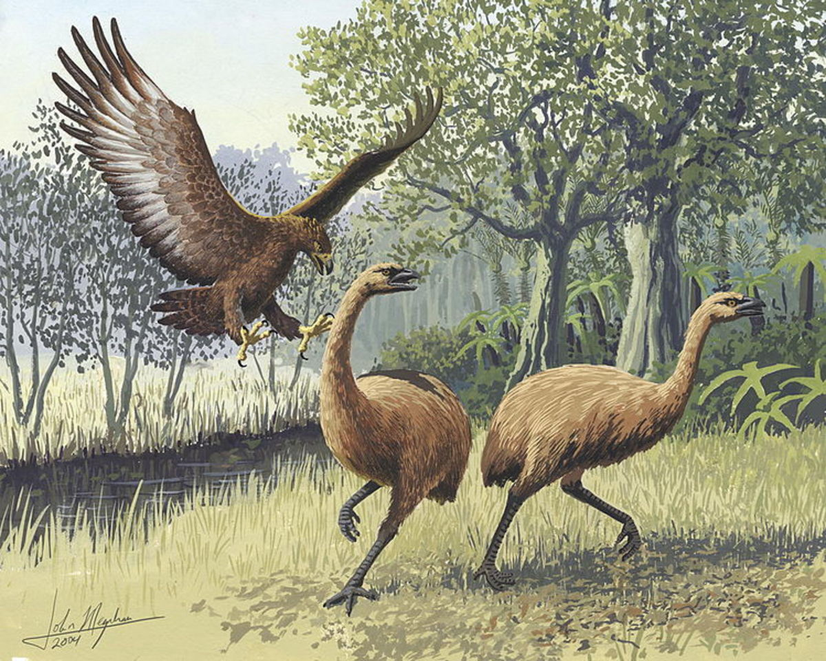 A Haast's eagle attacks two moas.