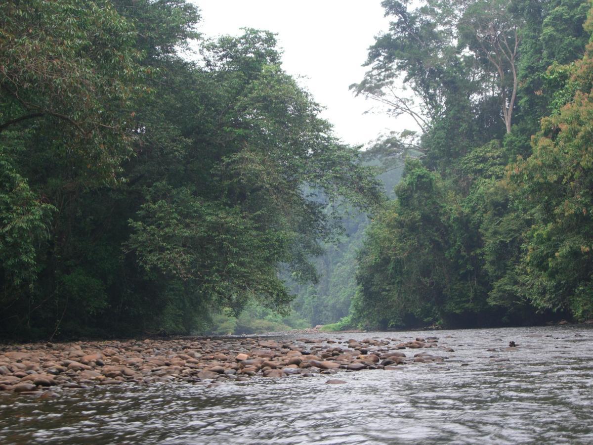 Temburong River
