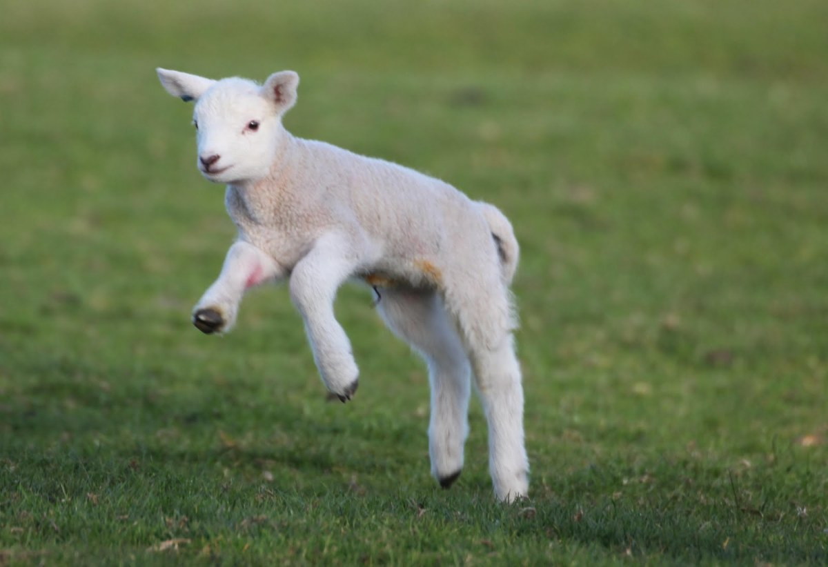 Lost Little Lambs Rest Your Hand In His