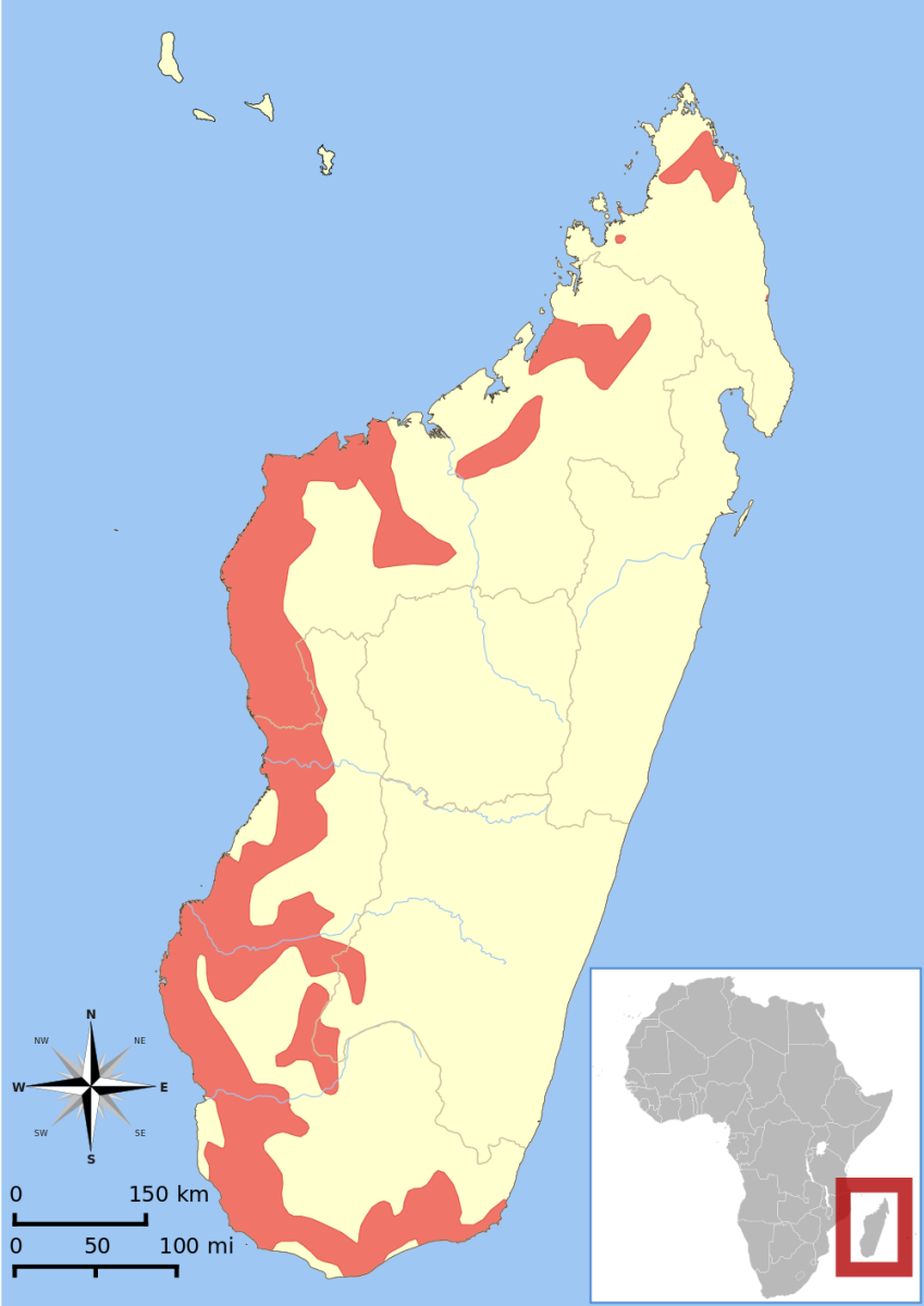 Range map for Cheirogaleus medius