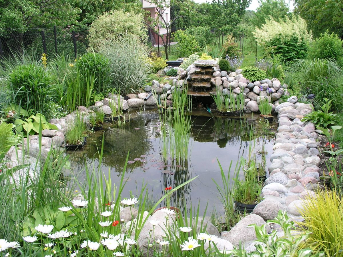 Garden ponds can be home to a wealth of wildlife.