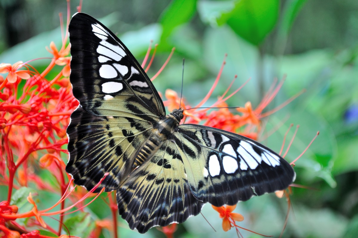 Butterflies are among the wildlife you can attract to your garden.