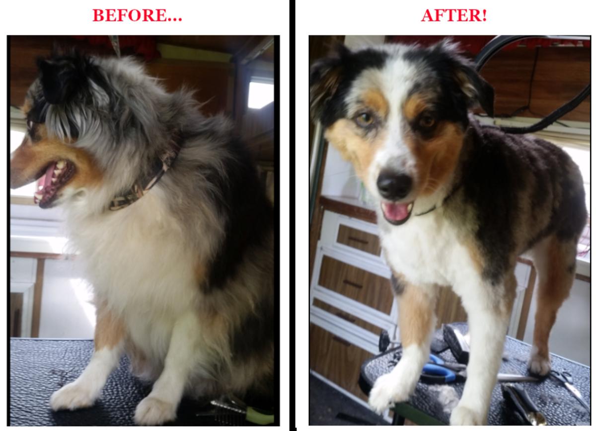 a-pet-grooming-career