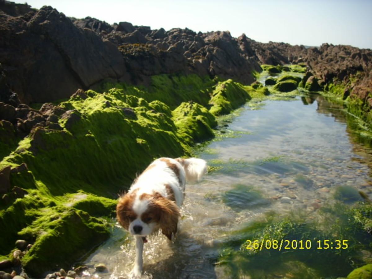 My Summer in Ireland