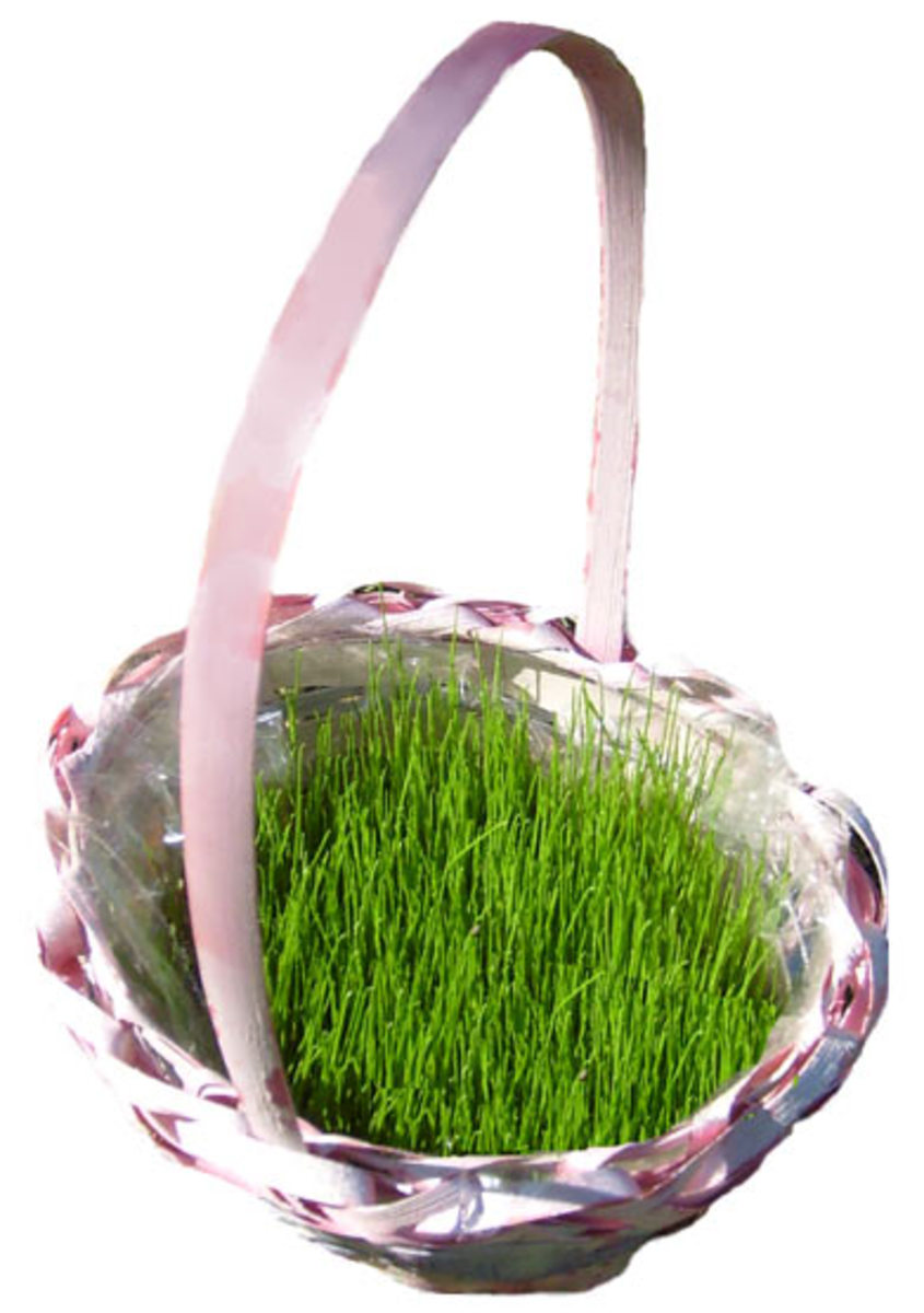 How To Grow Easter Basket Grass