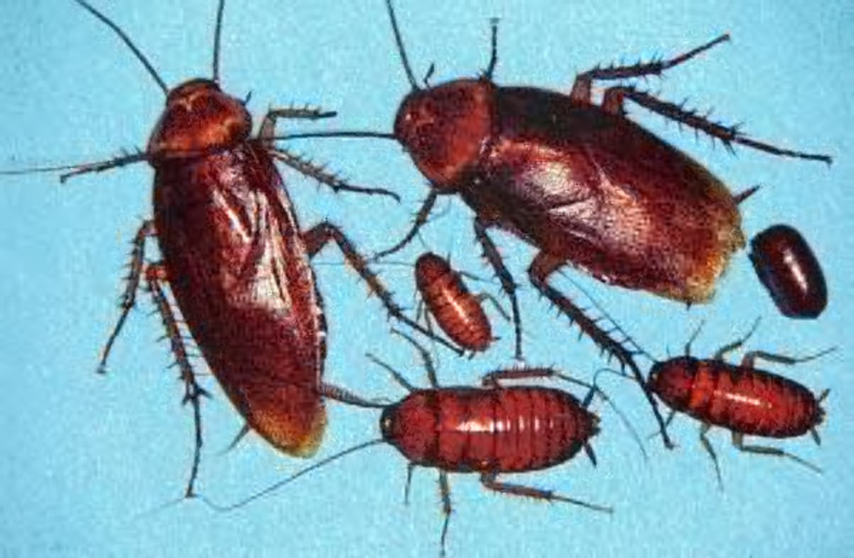 best way to get rid of ants and roaches diatomaceous earth hubpages. Black Bedroom Furniture Sets. Home Design Ideas