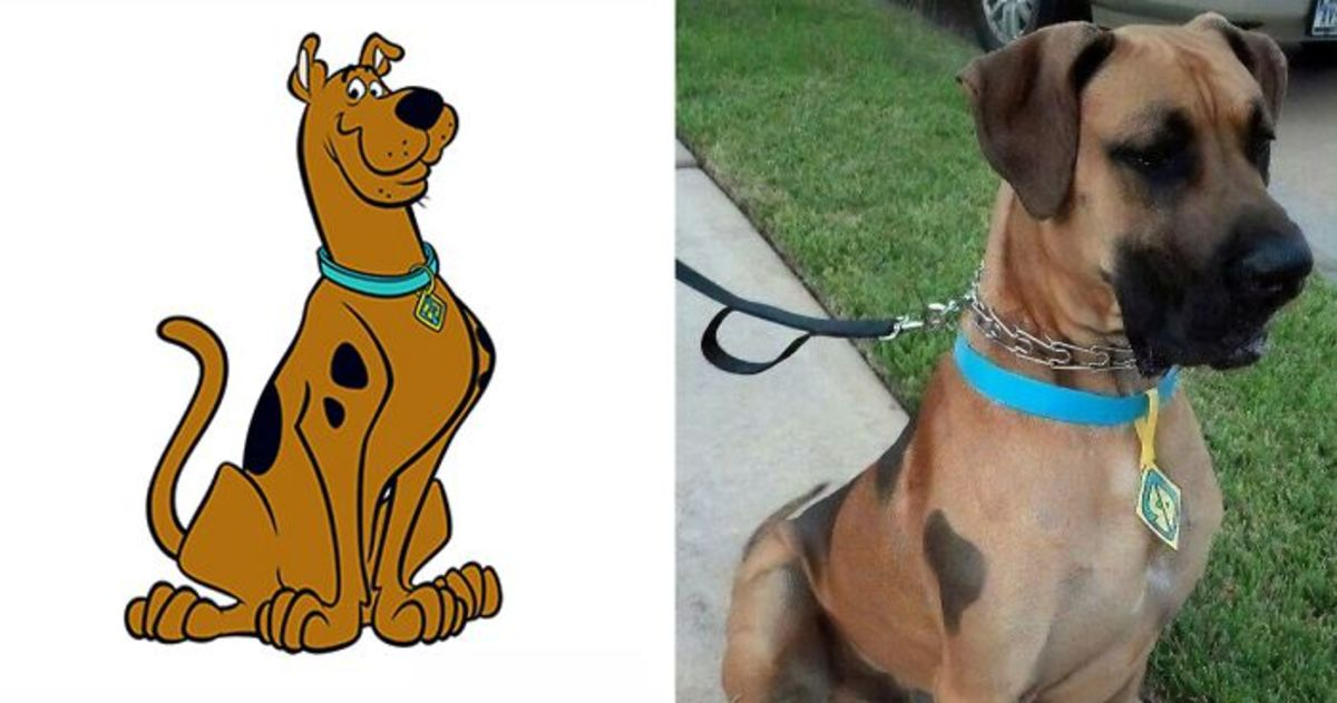 what-kind-of-dog-is-scooby-doo
