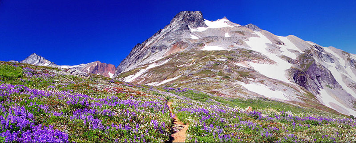 Wild flowers and Sahale Peak. Taken while hiking up the Sahale Arm in the North Cascades, Washington, US.