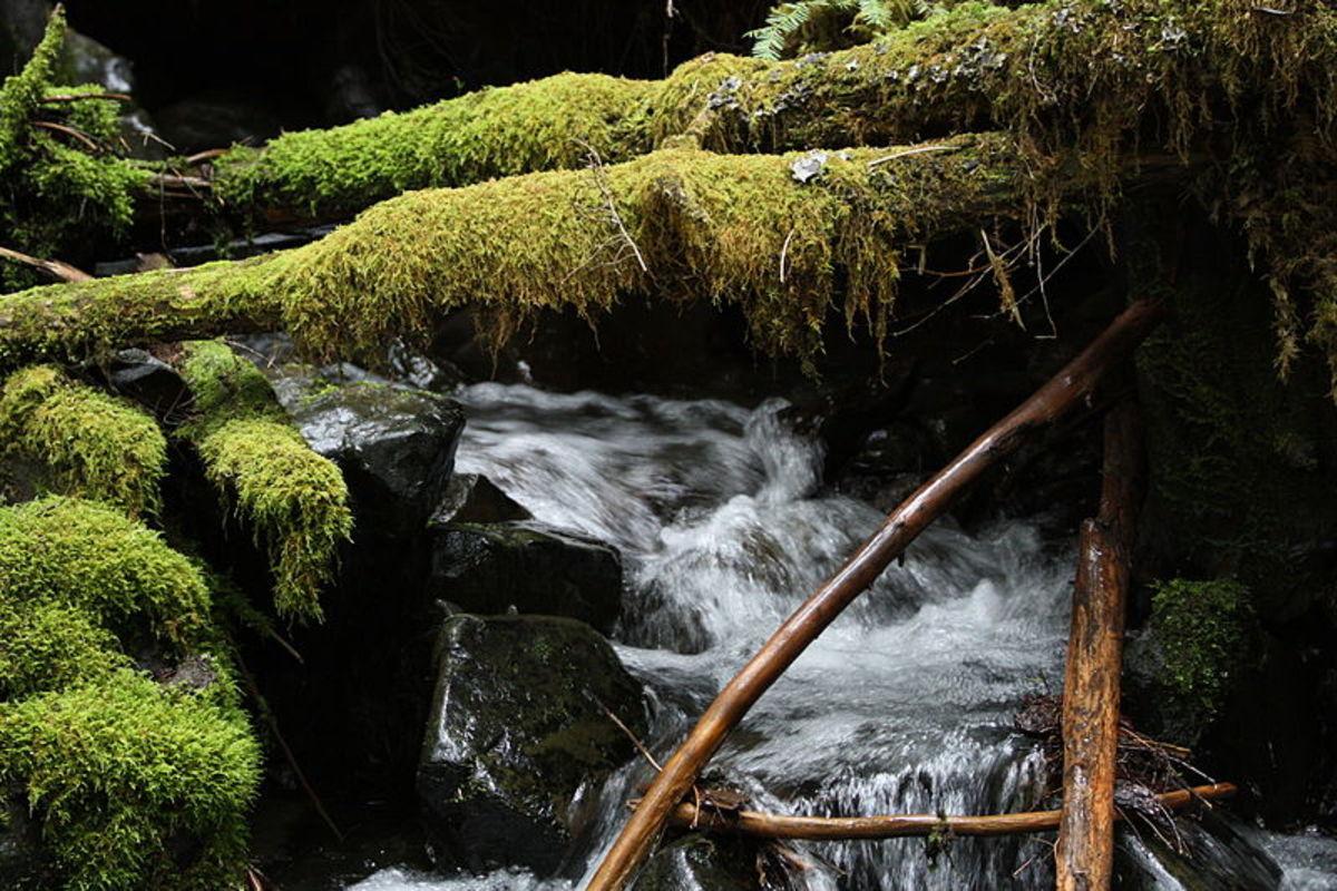 Coarse woody debris in mountain stream