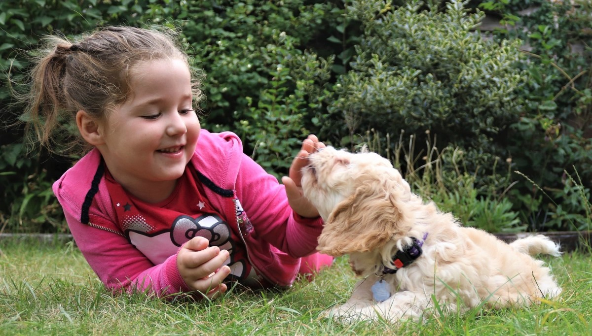 One critical element that affects a dog's development is its ability to pay attention.