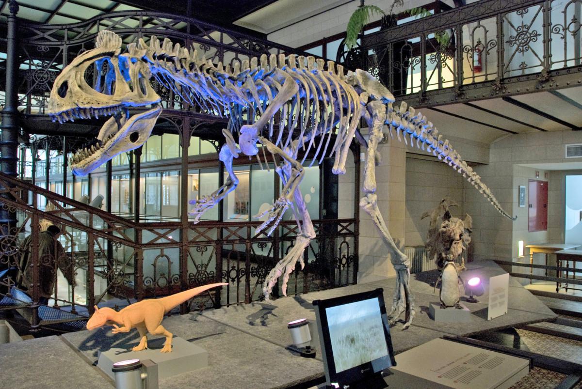 Skeleton of Crolophosaurus Brussels