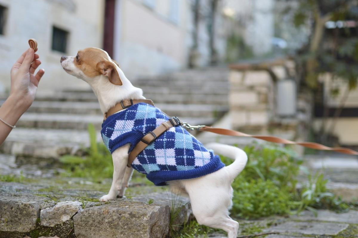 best-dog-treat-pouch