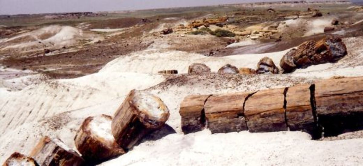 Long Logs in the Petrified Forest National Park