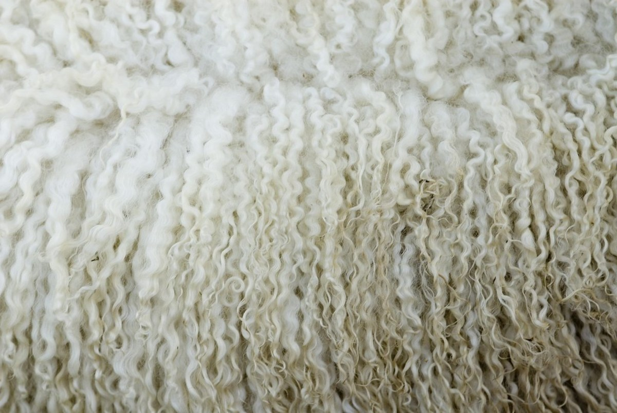 Wool before processing.