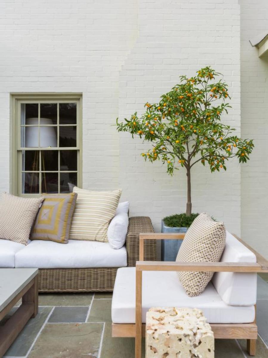 The wonderful medium tree for the patio.