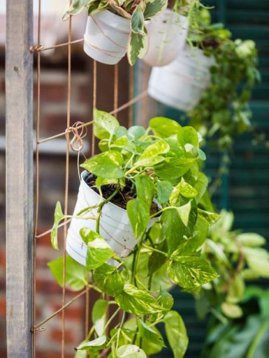 Make a large trellis to showcase hanging plants. This DIY container garden can be customized to fit into any garden.