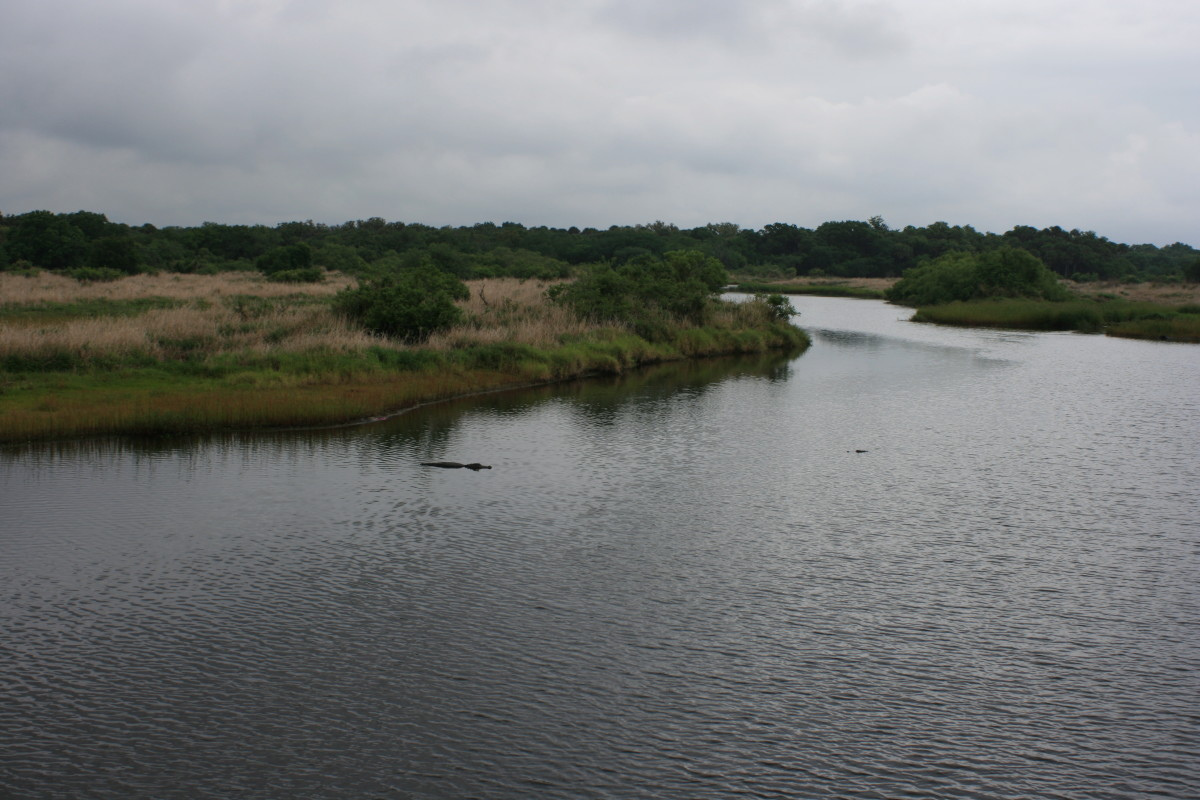 The Myakka River meandering through Myakka River State Park. Notice the Florida natives lurking in the water.